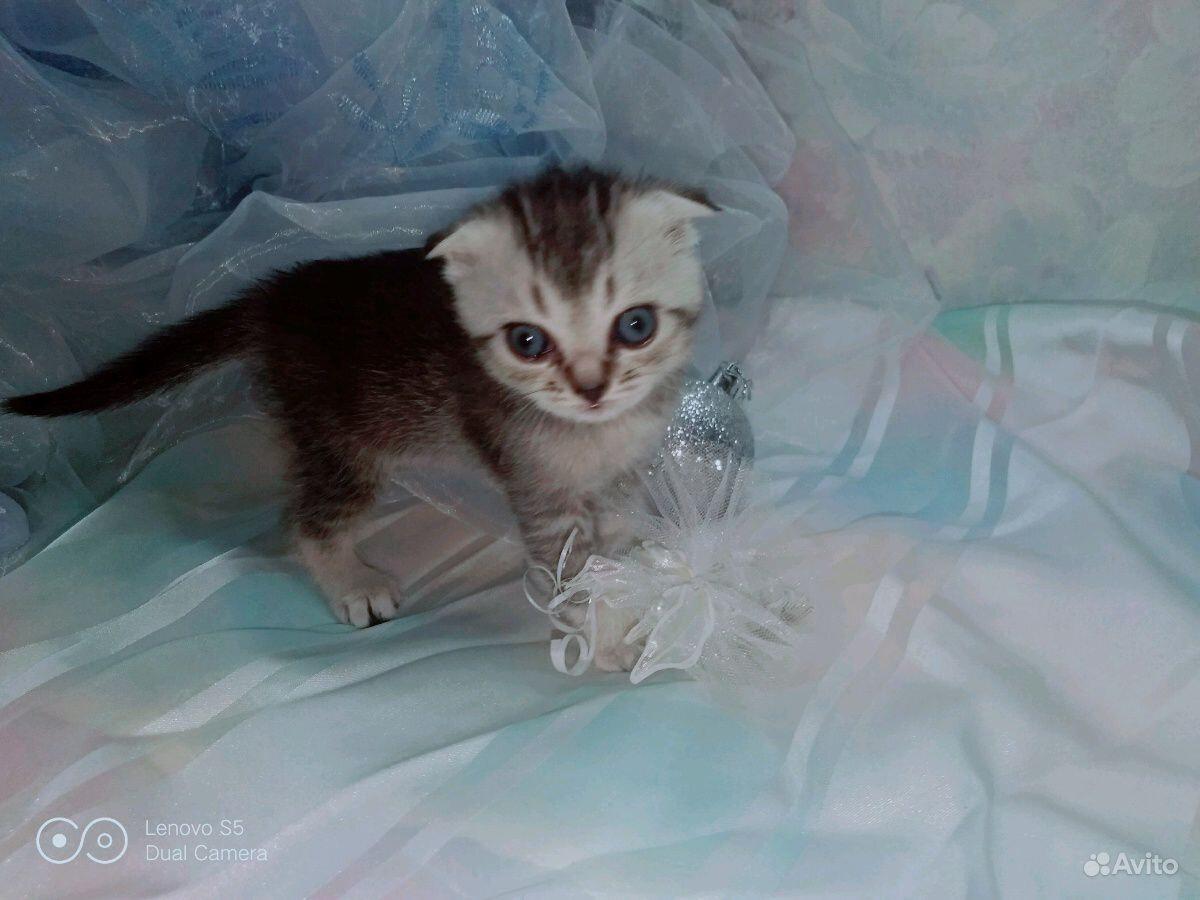 Котята в Новочебоксарске - фотография № 4