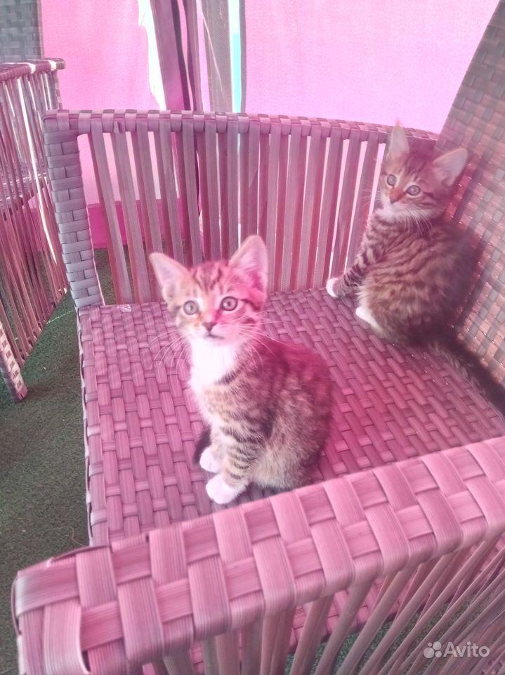 Отдаю котят в дар в Чехове - фотография № 2
