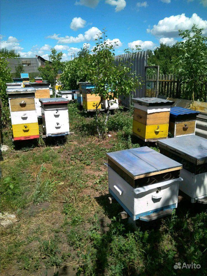 Рой пчёл в Ворошнево - фотография № 1