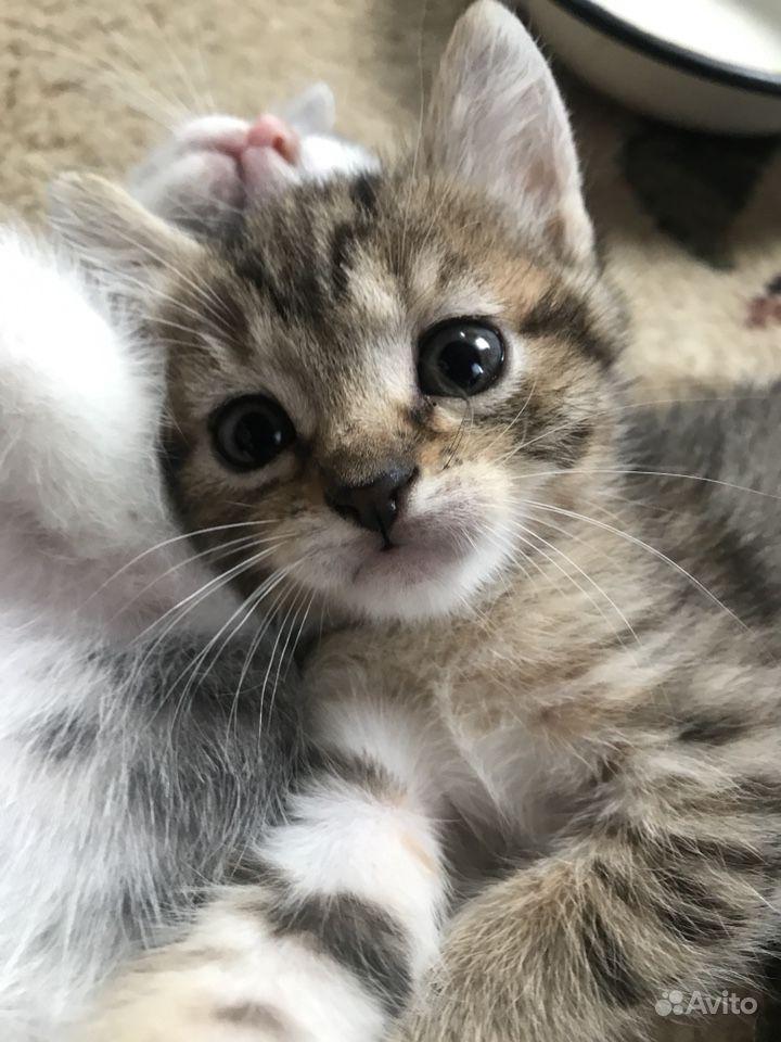 Котик в пятнышко в Твери - фотография № 2