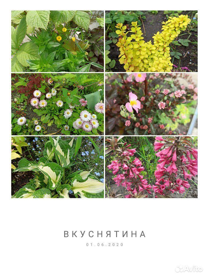Саженцы купить на Зозу.ру - фотография № 8