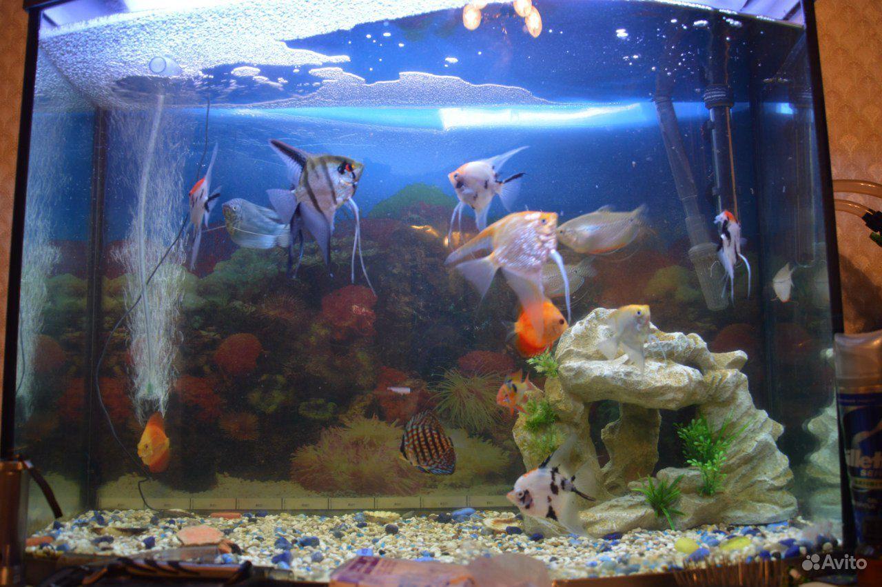 Аквариум Tetra Тетра 130 литров Tetra Aqua Led 130 купить на Зозу.ру - фотография № 2