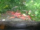Аквариумные креветки,улитки,мхи и растения