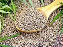 Семена конопля в челнах конопля вырастить