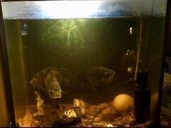 Аквариум с рыбами и со всеми принадлежностями
