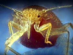 Обработка помещений от клопов мышей тараканов блох