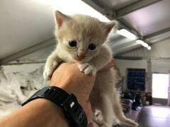 Котята в добрые руки бесплатно