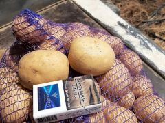Продам картофель калумба