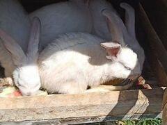 Продаю кролики с клетками
