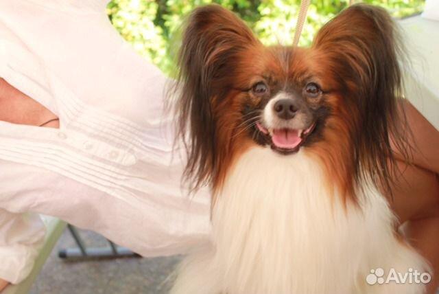 Купить собаку на авито в москве породы