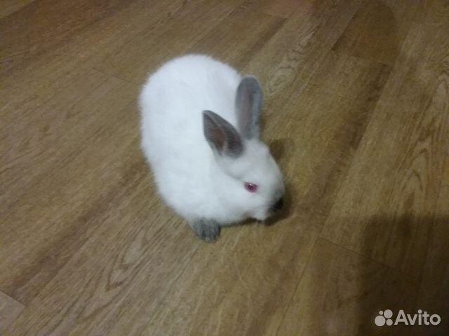 Продажа Кроликов 89600913764 купить 1