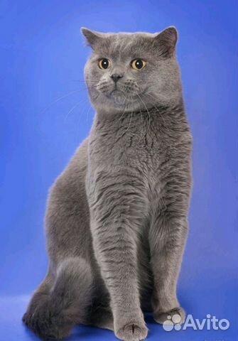 Котята серого окраса фото