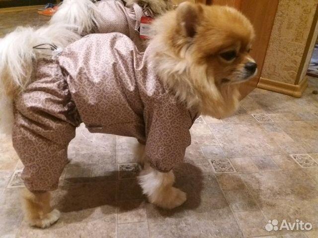 Корма для собак eukanuba отзывы