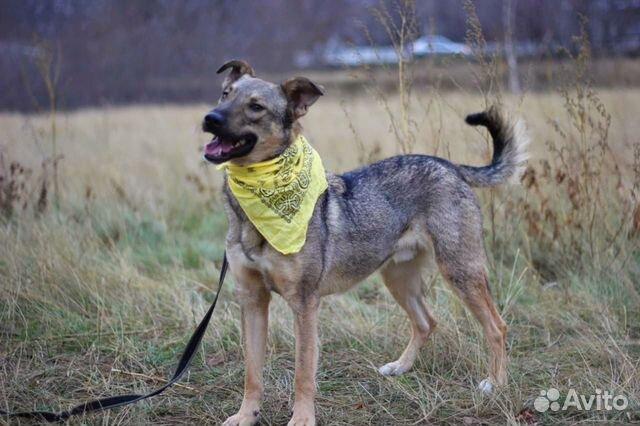 Пёс Смайлик в добрые руки купить на Зозу.ру - фотография № 6
