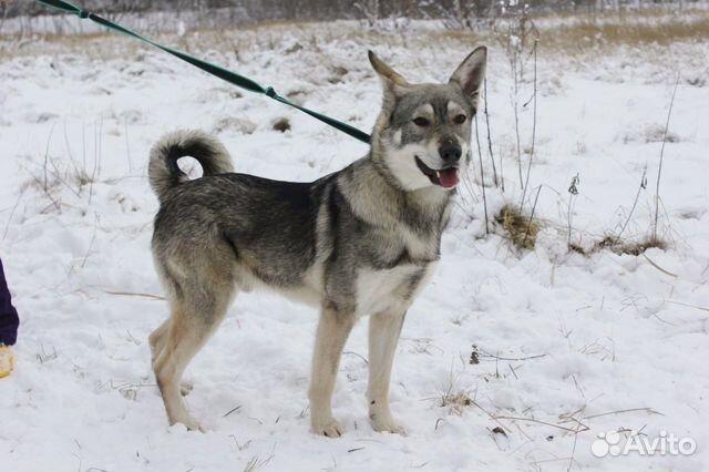 Пёс компаньон в добрые руки купить на Зозу.ру - фотография № 6