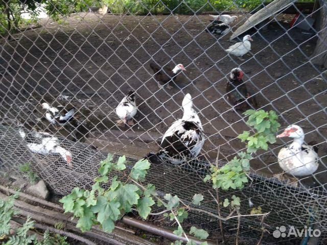 Птица 89384212820 купить 2