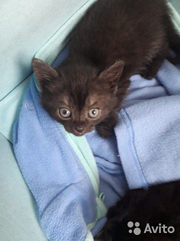 Котята в дар 89190418088 купить 1