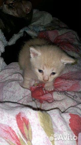 Котята в добрые руки  89005783690 купить 3