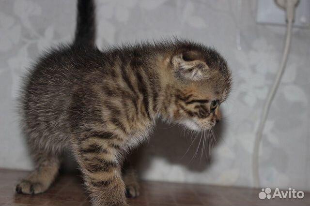 Котята  89050840059 купить 4