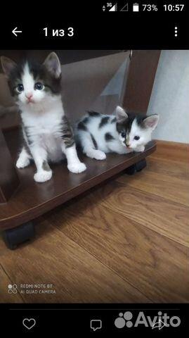 Кошка  89583990180 купить 3