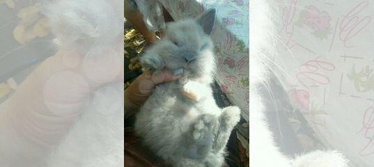 Кролик декоративный-обмен. Аюта