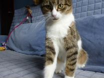 Кошка Муся ищет Дом