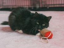 Кошечка Мотя