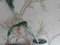 Амазонская лилия и фиалка
