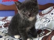 Котята в добрые и заботливые ручки)