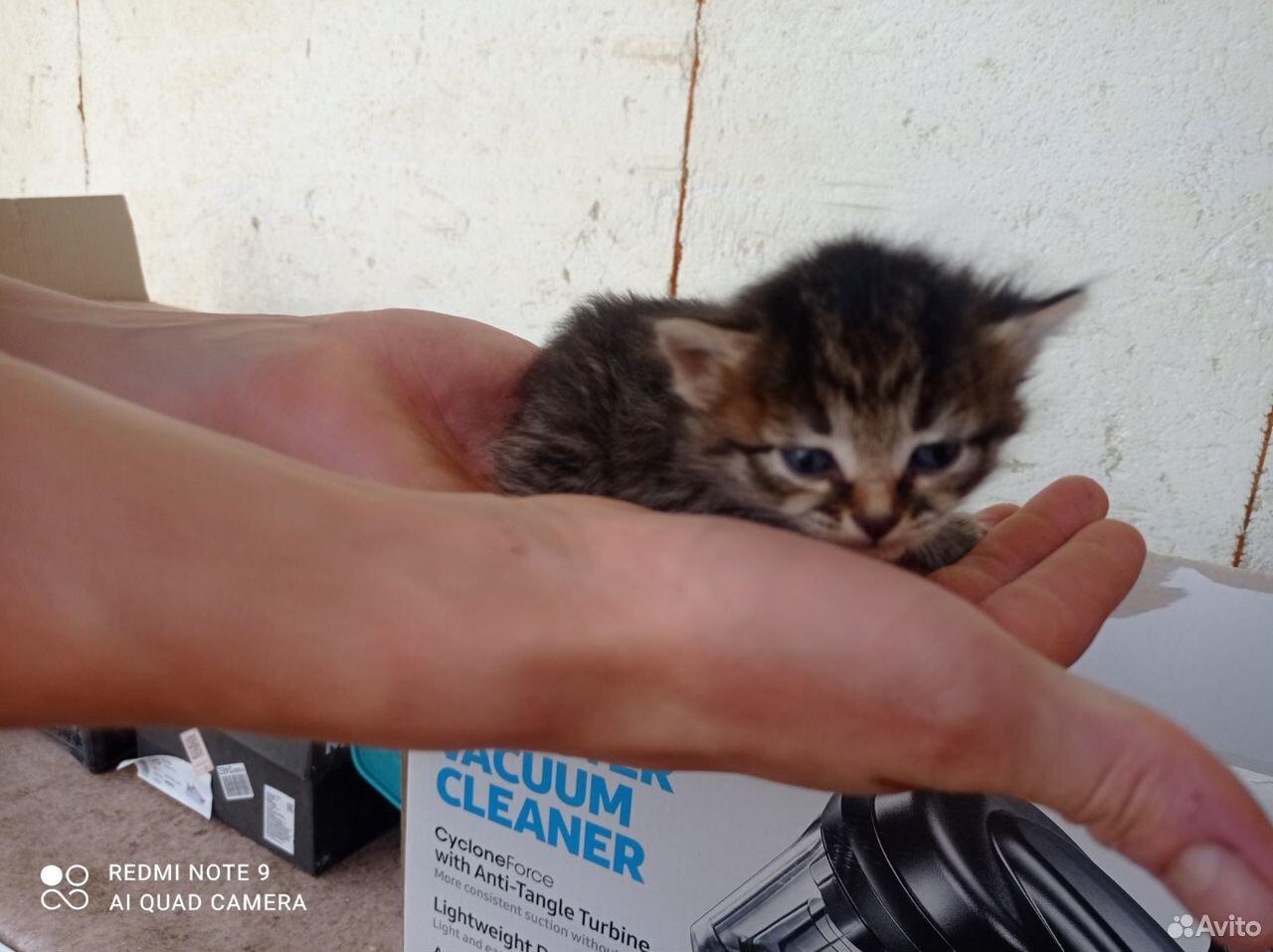 Котята в добрые руки  89055855983 купить 2