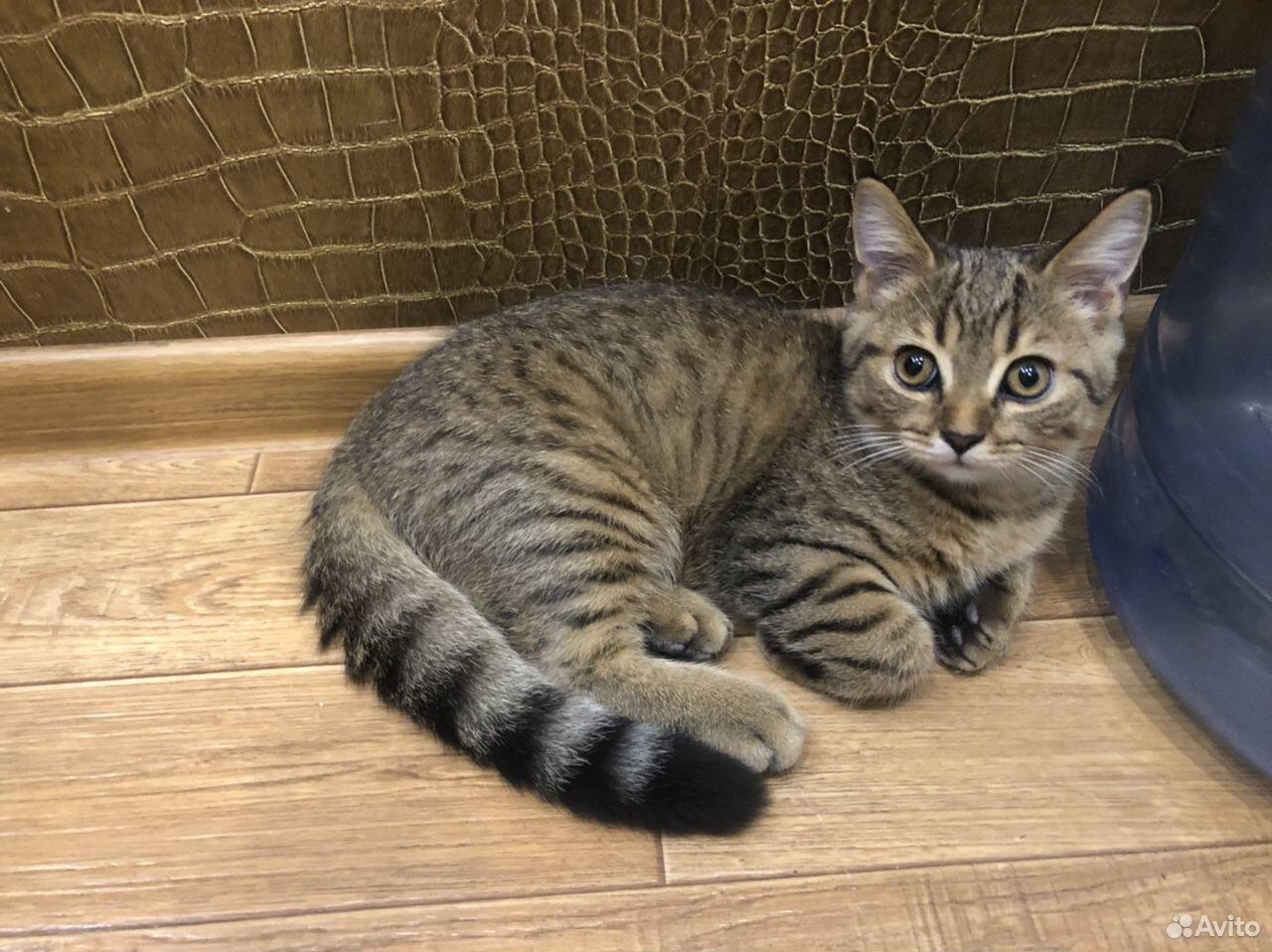 Кошка  89092051129 купить 4