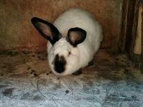 Продам кроликов Калифорнийских