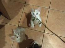 Трое ласковых котят