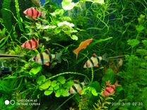 Растения живые аквариумные -хороший выбор