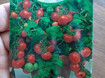 Саженцы томатов