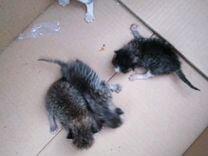 Новорождённые котята, им нужна помощь