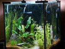 Аквариум-кубик aquael