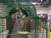 Попугаи с клеткой — Птицы в Москве