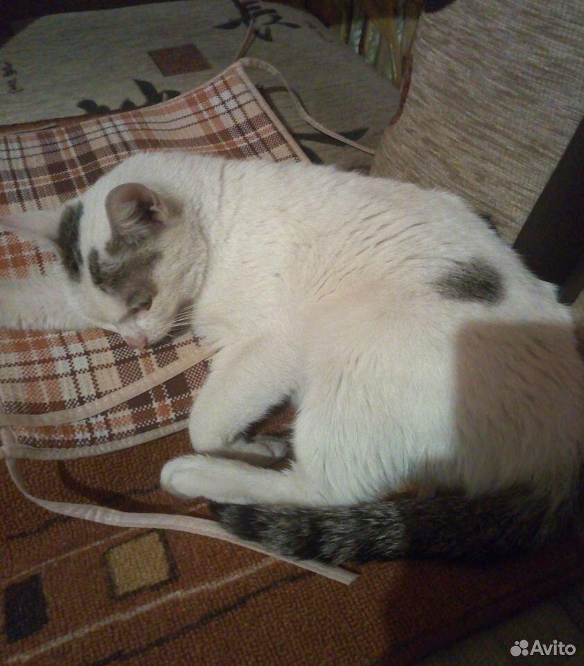 Gebe eine Katze  89234676953 kaufen 4
