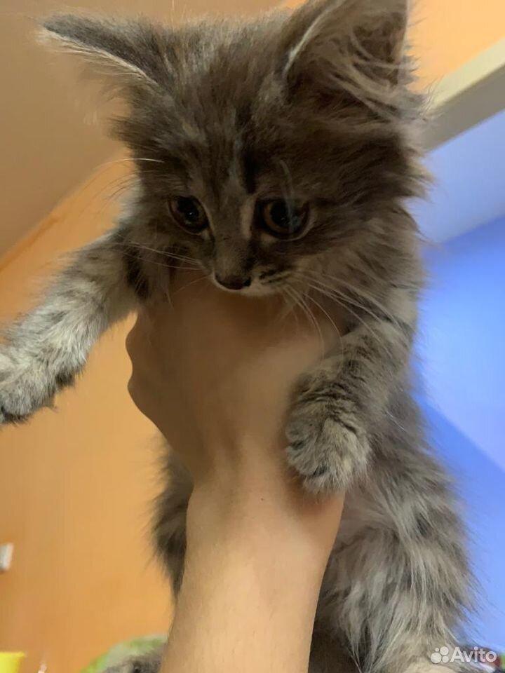 Отдам котеночка в хорошие руки  89538627737 купить 2