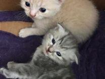 Сладкие котята