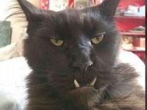 Продам кота) очень добрый, веселый и жизнерадостны
