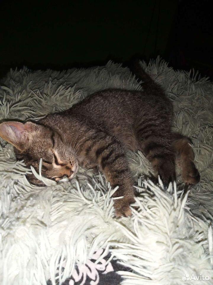 Отдам серого котенка в добрые руки  89502787846 купить 2